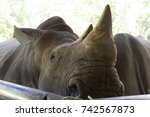 Small photo of Close-up photos of rhinoceros.The skin of the rhino is in the zoo.The animals are acknowledged for their endurance.