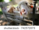 goat in the farm  happy life ... | Shutterstock . vector #742572073