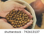 Small photo of Plants seed. seed on hand