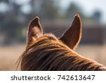 view of a horse from behind... | Shutterstock . vector #742613647