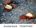 close up of chestnuts in late... | Shutterstock . vector #742647463
