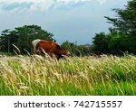 Small photo of Alang-Alang grass can be used as a forage of cattle feed (cow) which grows chronic alternative in Indonesia
