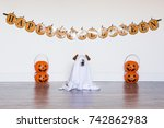 dog sit as a ghost for...   Shutterstock . vector #742862983