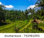 Rice Terrace At Gunung Kawi...