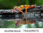 Leopard Gecko In Reflection