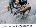 Stock photo dog walker 743180917