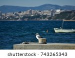 Young Seagull Perched And...