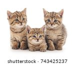 Stock photo three small kittens isolated on a white background 743425237