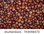 Autumn Conkers From Above