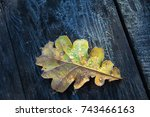 Beautiful Frozen Oak Leafs On...