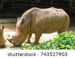 the white rhinoceros or square... | Shutterstock . vector #743527903