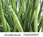 Small photo of aloe plant