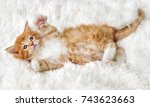 Stock photo little cute kitten maine coon looks up 743623663