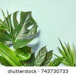 various tropical leaves on a... | Shutterstock . vector #743730733