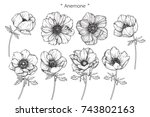Stock vector anemone flowers drawing with line art on white backgrounds 743802163