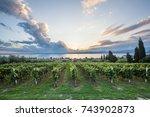 grape harvest | Shutterstock . vector #743902873