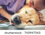 old dog in the animal hospital. ... | Shutterstock . vector #743947543