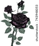 black roses bouquet isolated on ... | Shutterstock .eps vector #743948053