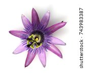 Small photo of Passiflora Violacea, Violette
