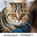 cat home close up portrait | Shutterstock . vector #743984077