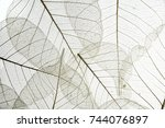 a leaf texture close up... | Shutterstock . vector #744076897