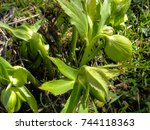 endemic plants and flowers in...   Shutterstock . vector #744118363