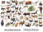 collection of different birds ... | Shutterstock . vector #744219313