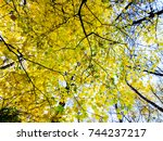 yellow autumn tree with leaves.... | Shutterstock . vector #744237217