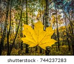 single leaf in a forest in... | Shutterstock . vector #744237283