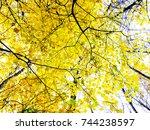 autumn tree. yellow autumn tree.... | Shutterstock . vector #744238597