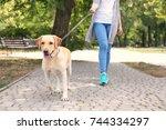woman walking labrador... | Shutterstock . vector #744334297