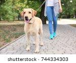 woman walking labrador... | Shutterstock . vector #744334303