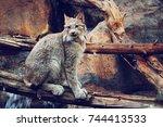montreal biodome canada lynx   Shutterstock . vector #744413533