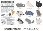 chinchilla breeds icon set flat ... | Shutterstock .eps vector #744513577