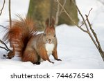 cute fluffy squirrel eating... | Shutterstock . vector #744676543