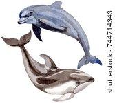 dolphin wild mammals in a... | Shutterstock . vector #744714343