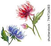 wildflower chrysantemum flower... | Shutterstock . vector #744716383