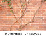 brick wall with creeping plant. | Shutterstock . vector #744869383
