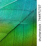 macro leaves background texture | Shutterstock . vector #744971737