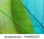 macro leaves background texture | Shutterstock . vector #744985237