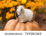 funny guinea pig sitting on... | Shutterstock . vector #745381363