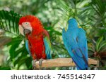 blue and red macaw bird one of...   Shutterstock . vector #745514347