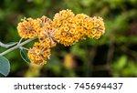 a macro shot of a yellow... | Shutterstock . vector #745694437
