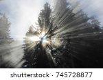 pine sunbeam   Shutterstock . vector #745728877