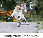 Beautiful Cat Fun And Cleverly...