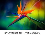 beautiful tropical heliconia... | Shutterstock . vector #745780693