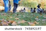 children feed wild ducks | Shutterstock . vector #745892197