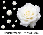 Stock photo multiple white roses on black background 745933903