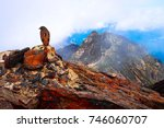 Small photo of An cllared accentor on Mt.Jade. The highest mountain in Taiwan.