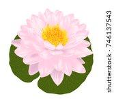 Beautiful  Lotus Flower ...